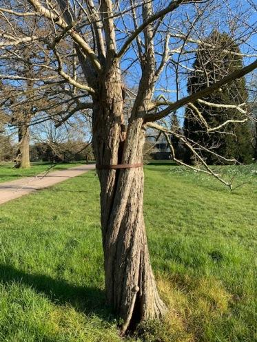 05 tree IMG_2879